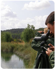 Birdwatching in Ruidera